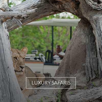 Explora todos los Safaris de lujo de TerresLuxury